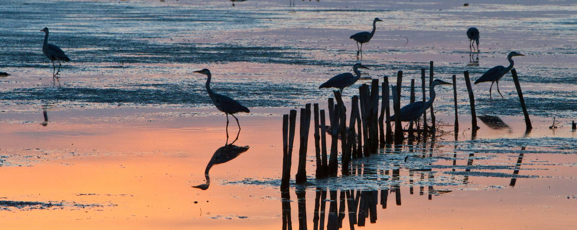 Birds in Portes-en-Ré by François Blanchard