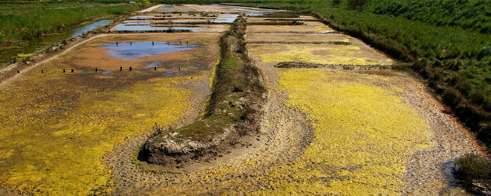 The marshes of Portes en Ré