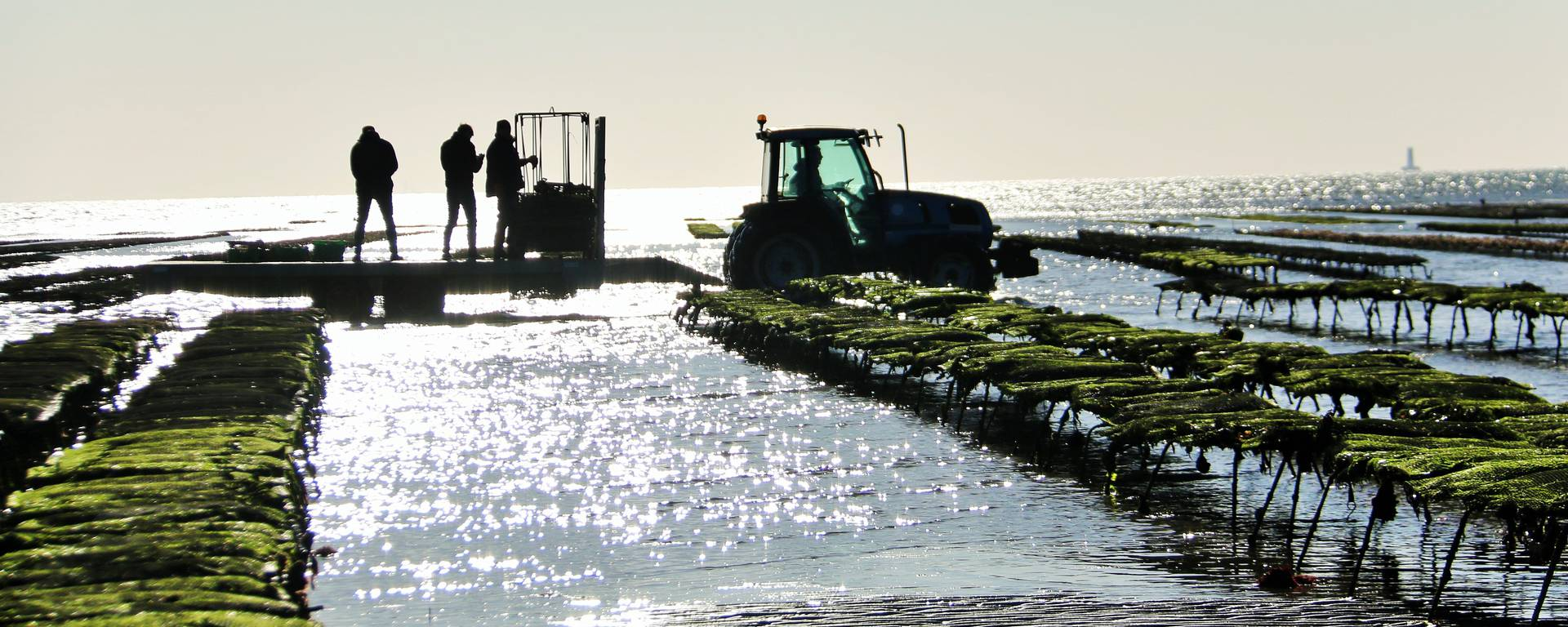 Oyster farmers on their farm