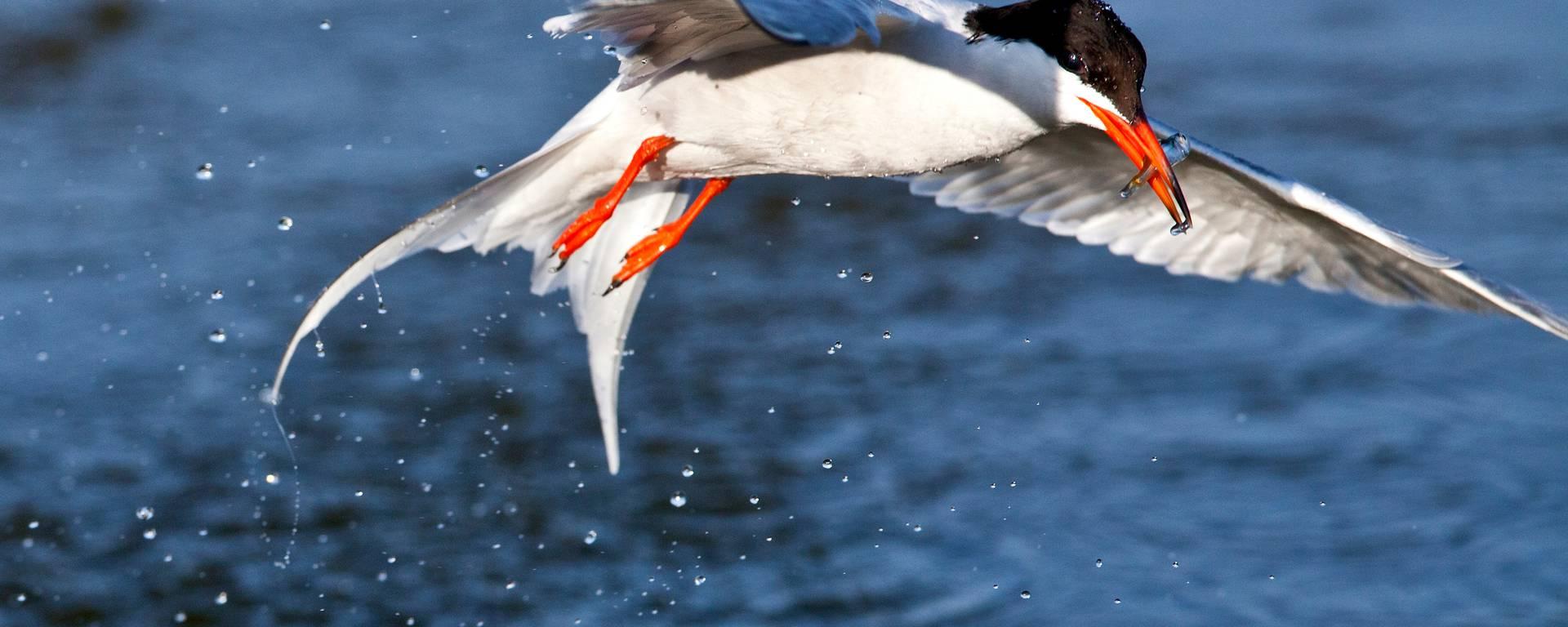 Bird over the water