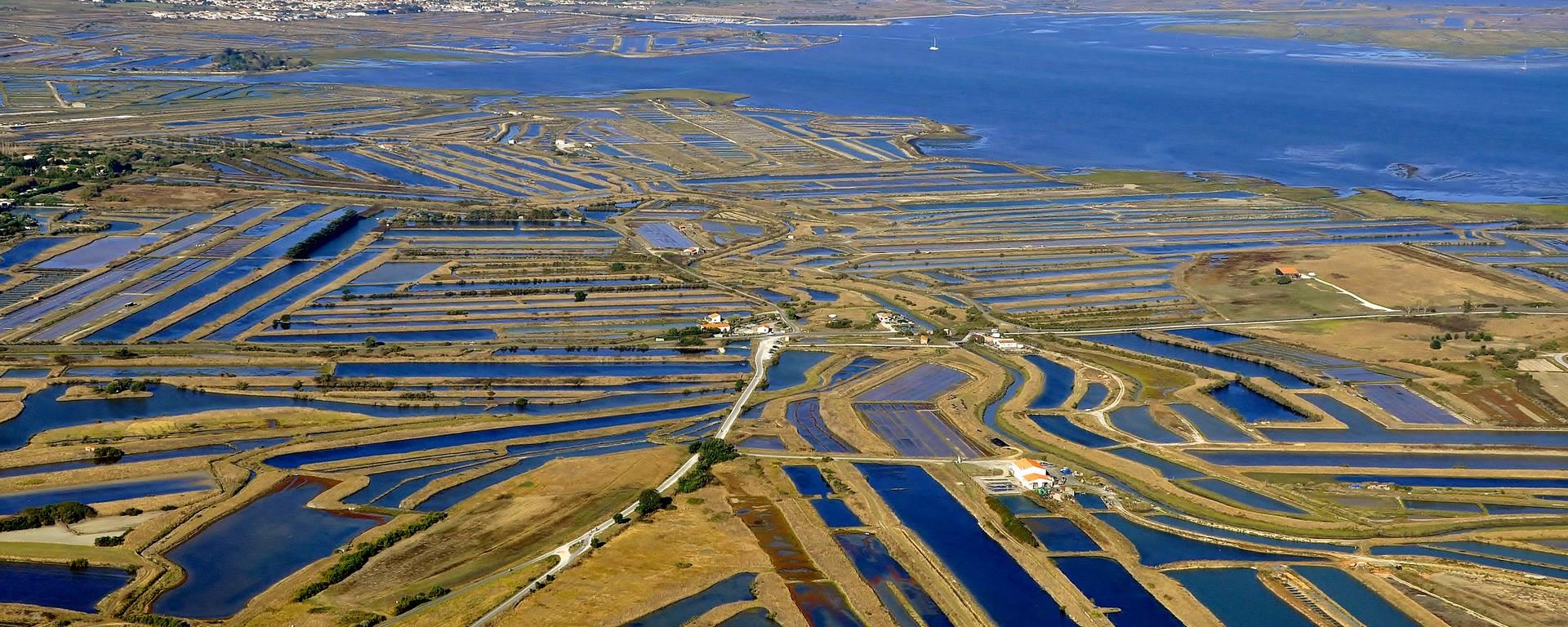 The salt marshes of Ile de Ré as far as the eye can see by Bernard Collin