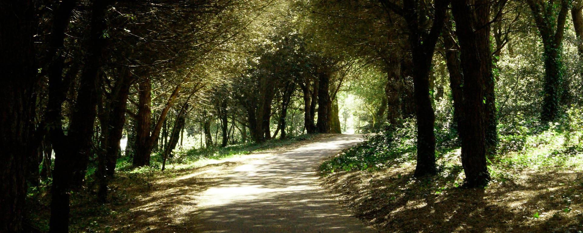 Forest in Les Portes en Ré by Pierre Galine