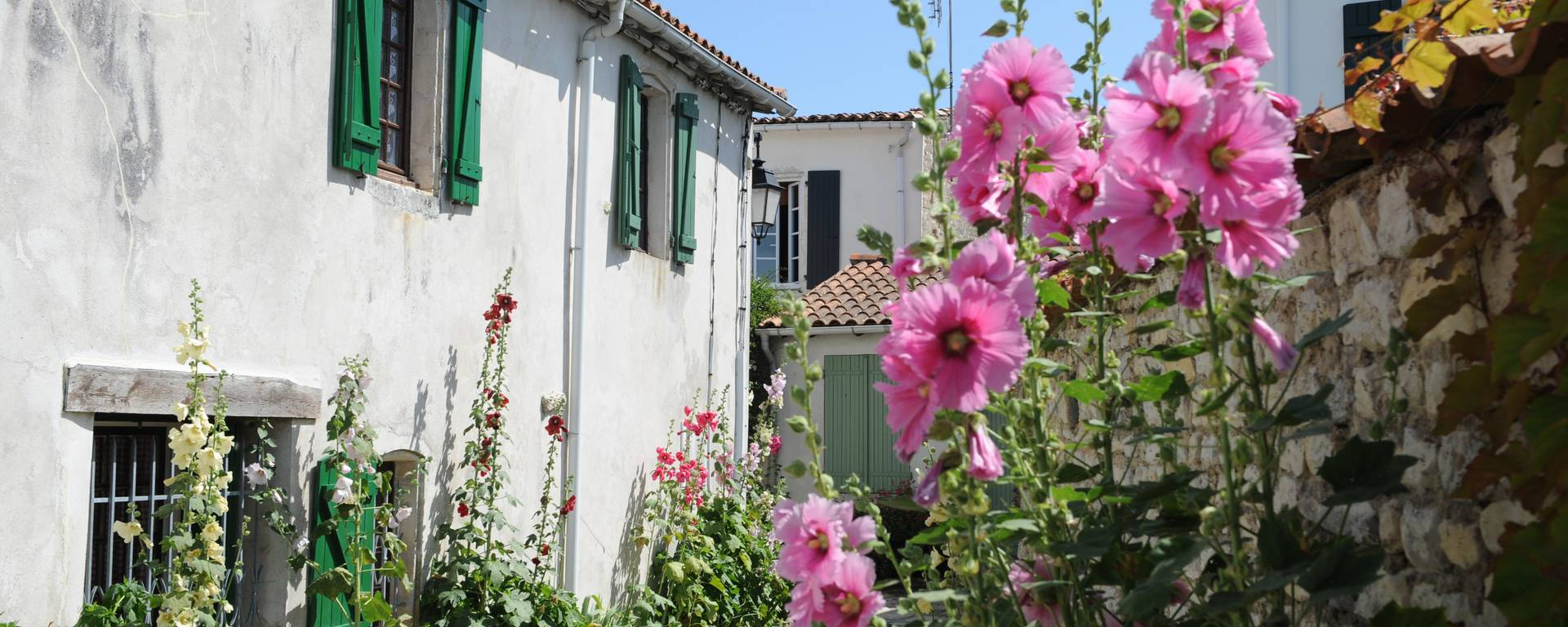 small alleys and hollyhocks