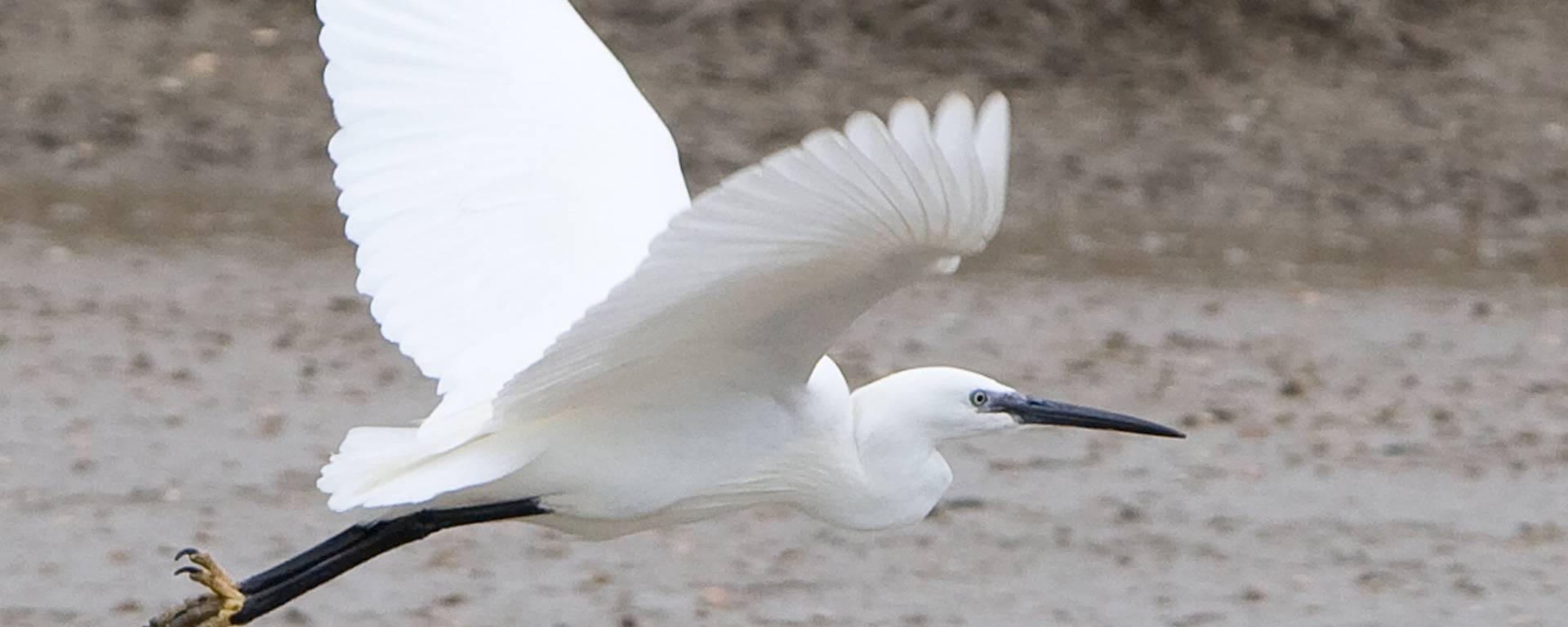 Bird in flight © François Blanchard