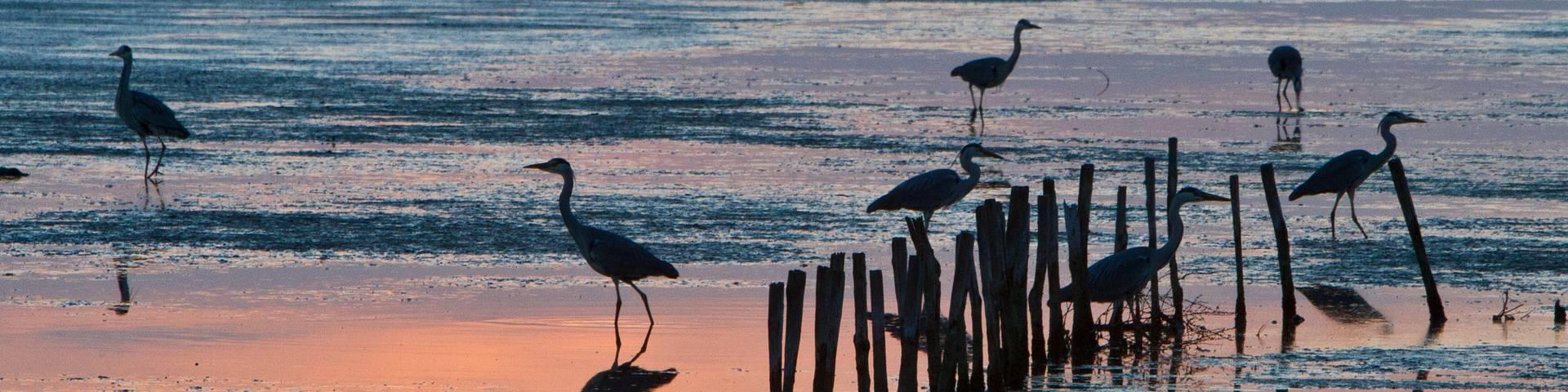 Birds on the beach by François Blanchard