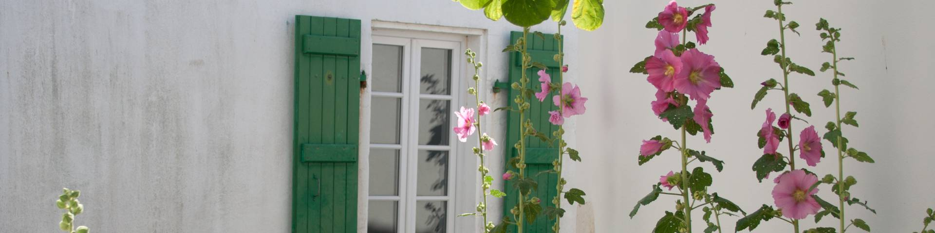 Accommodation rentals in La Couarde-sur-Mer
