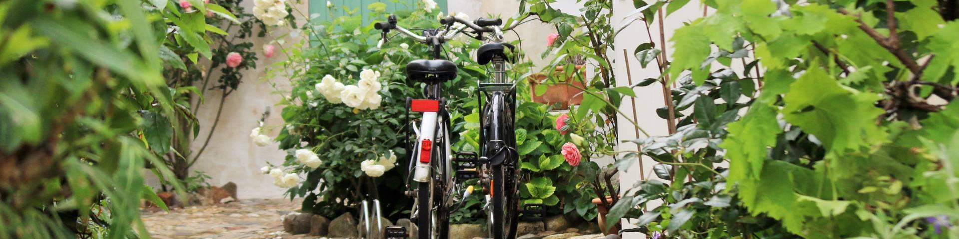 Bike rentals in Loix