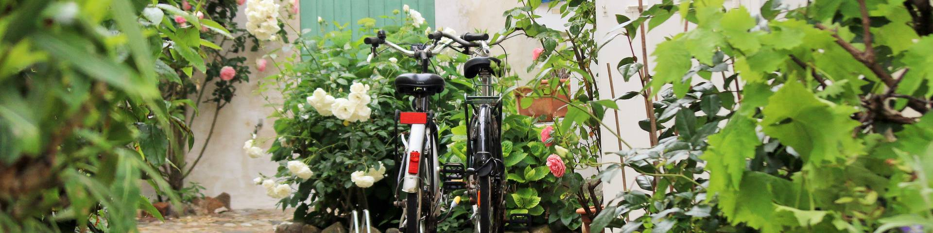 Bike rentals in Saint-Martin-de-Ré by Lesley Williamson