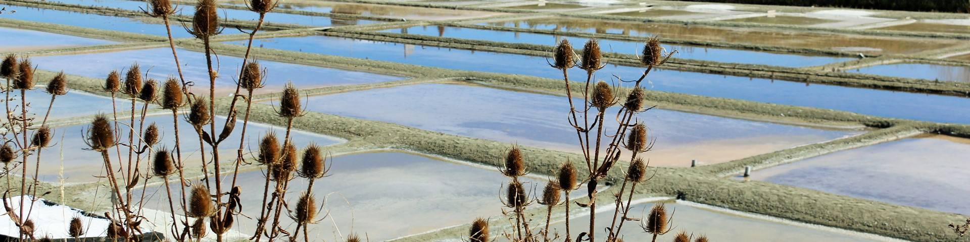 Salt marshes ©Lesley Williamson