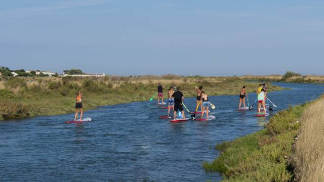 Walk in the marshes in stand-up paddle
