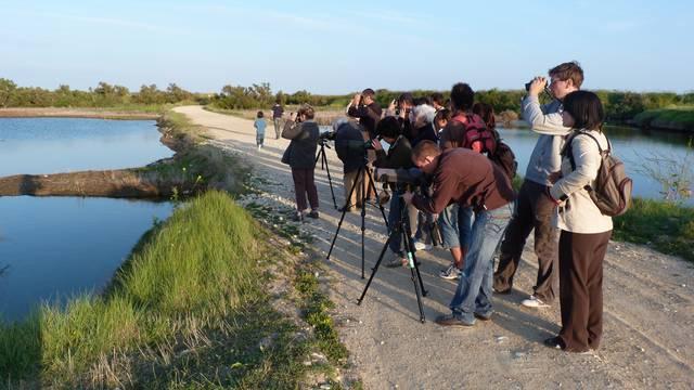 Bird Protection League excursion, nature in Les Portes-en-Ré, Ile de Ré