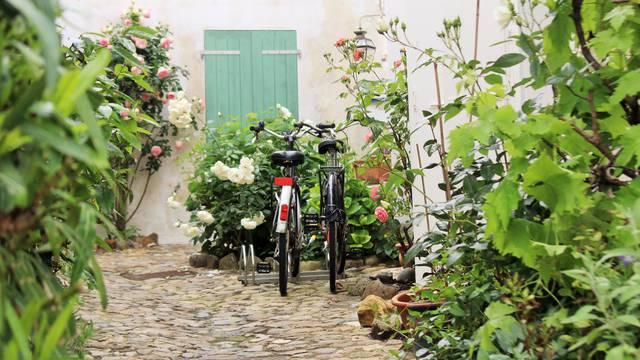 Bike rentals in Saint-Martin-de-Ré by Lesley Williamson