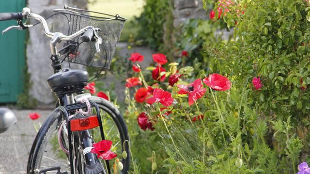 Bike trips in Sainte-Marie-de-Ré