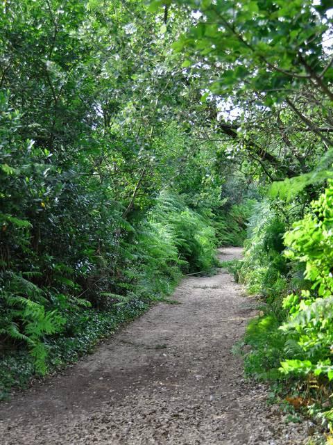 Le Bois-Plage : forest by Bernard Collin