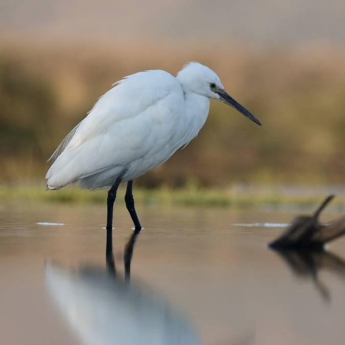 Bird Ile de Ré