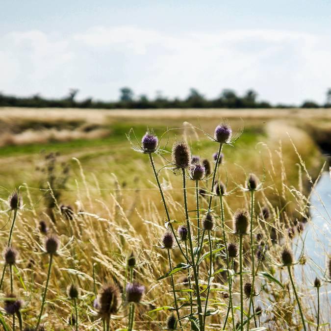 Marsh Ile de Ré